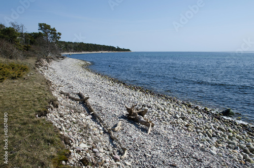 Driftwood at a stony coast