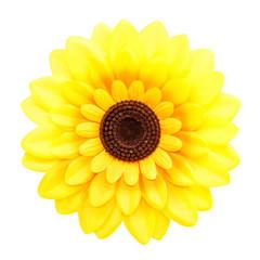 Sunflower (isolated)