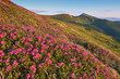 Flowering mountain meadows