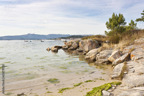 Pine tree at Espineiro beach on Arousa Island