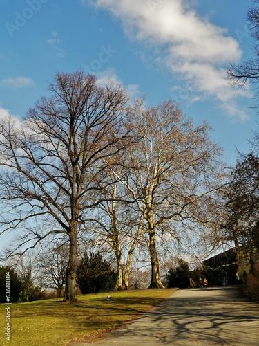 Winterbäume im Park