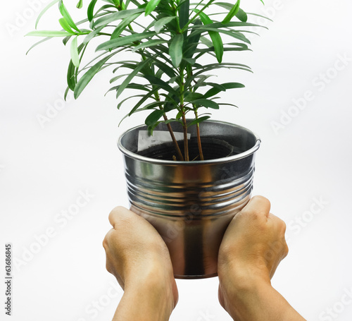 Hand holding a pot with small plant