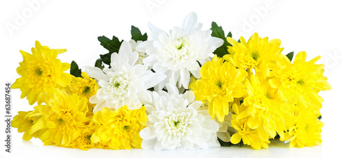 Beautiful chrysanthemum flowers isolated on white