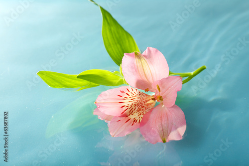 Floating flower close up