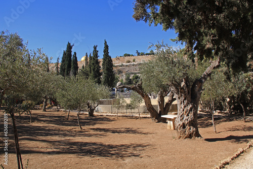 Foto op Plexiglas Olijfboom Garden of Gethsemane in Israel