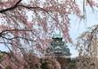 大阪城と枝垂桜