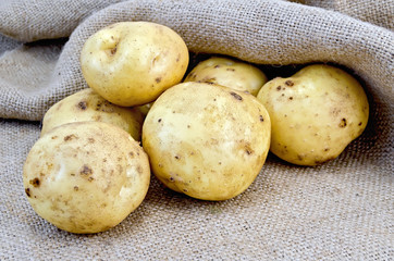 Potatoes yellow on burlap background