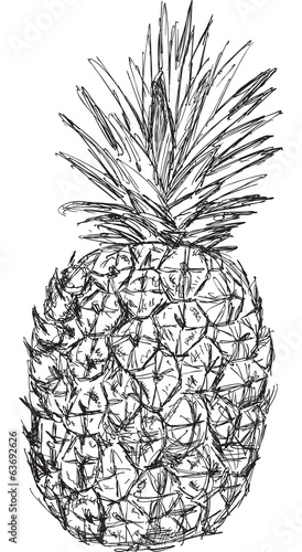 single pineapple sketch isolated on white