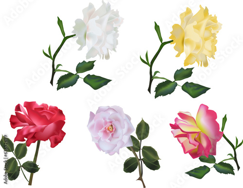 five isolated color roses collection