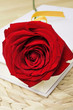 canvas print picture - red rose and book, for Saint Georges Day in Catalonia, Spain