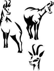 stylized chamois