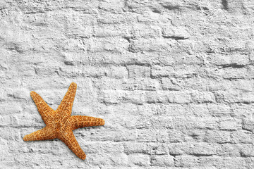 Starfish and brick wall