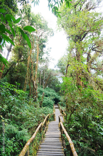 the walk way in the rainforest ,