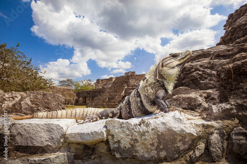 Iguana in foreground over Mayan ruins. Ek-Balam, Yucatan, Mexico