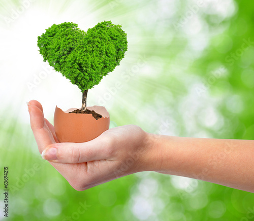 Hand holding tree in the shape of heart growing out of the egg
