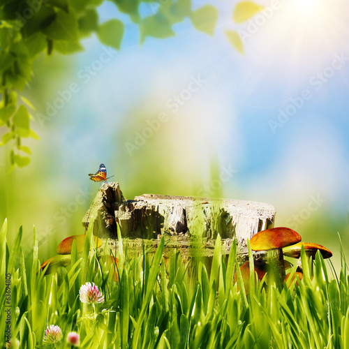 Abstract natural backgrounds with green grass, mushrooms, etc un