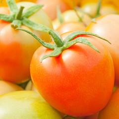 Closeup fresh tomatoes