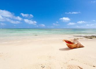 coquillage sur plage de l'île Maurice