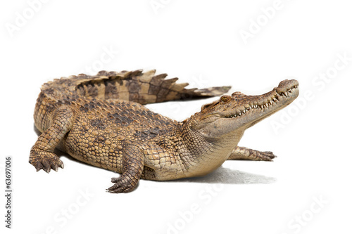 Foto op Canvas Krokodil crocodile