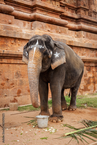 Elephant in Hindu temple