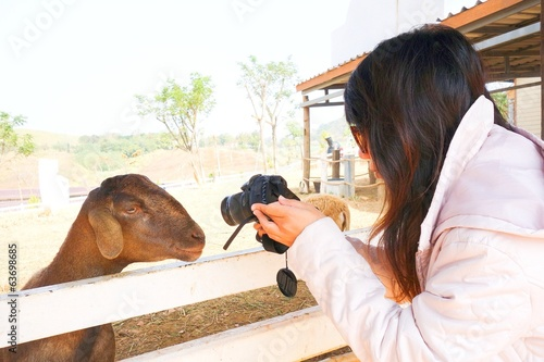 A woman is taking a goat photo