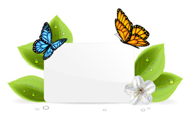 Paper card with butterflies