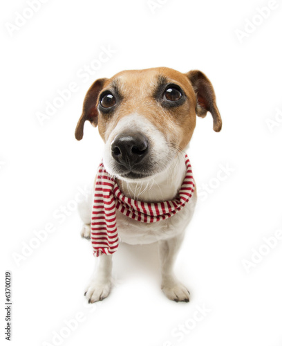 Fashion cool dog in a scarf