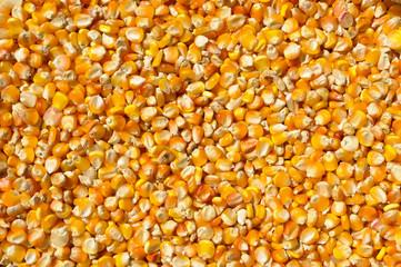 Beans of corn
