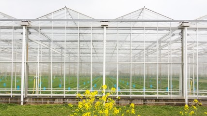 Greenhouse with coleseed in front