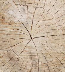 tree circle texture