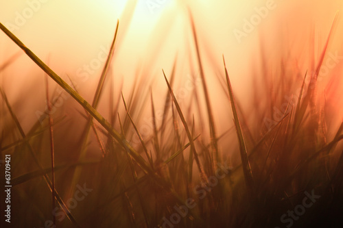 canvas print picture grasses back light