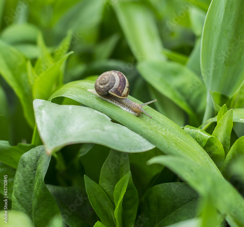 Snail on leaf in garden