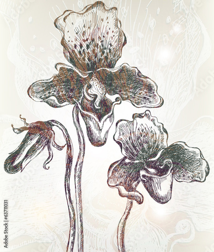 Vintage orchid background. Vector. EPS 10.