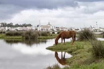 Aldea del Rocío, Huelva, España