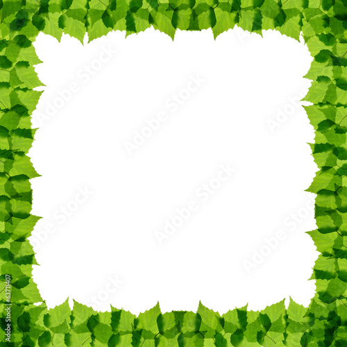 Green birch leaves frame