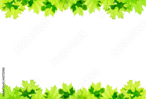 Frame of green maple leaves