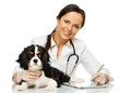 Veterinary woman with spaniel taking notes on tablet pc