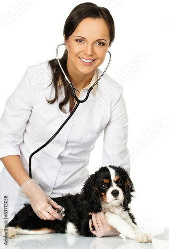 Veterinary woman holding spaniel with wounded leg