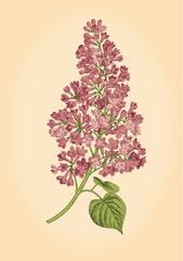 Purple lilac branch on a light beige background.