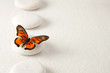 canvas print picture Background with rocks and butterfly
