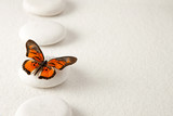 Fototapety Background with rocks and butterfly