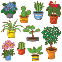 Pot plants and flowers