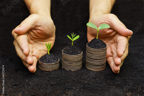 hands holding tress growing on coins / csr / sustainable