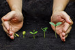 Постер, плакат: plants growing in sequence of seed germination on soil