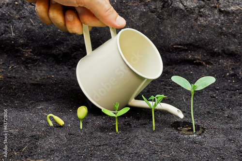 watering plants growing in sequence of seed germination on soil