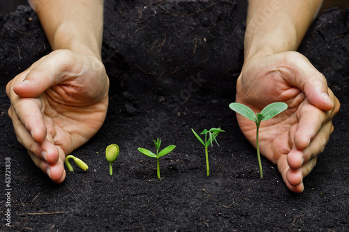 plants growing in sequence of seed germination on soil