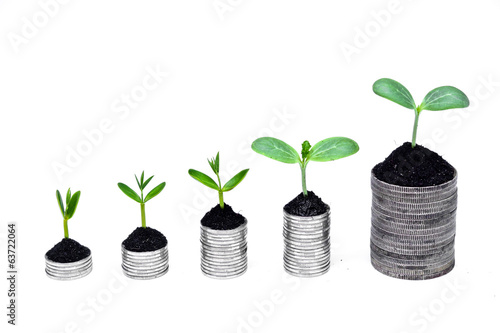 tress growing on coins / csr / sustainable development