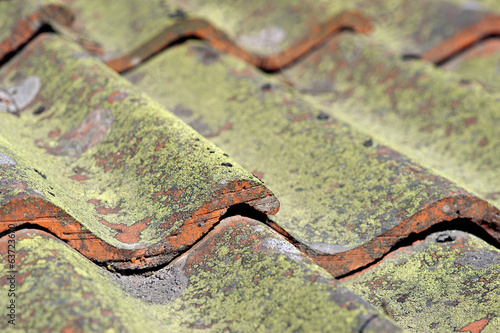 tiled roof with fungus
