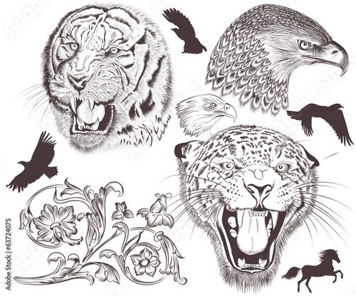 Collection of vector high detailed animals for design