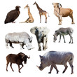 Warthog and few other African animals